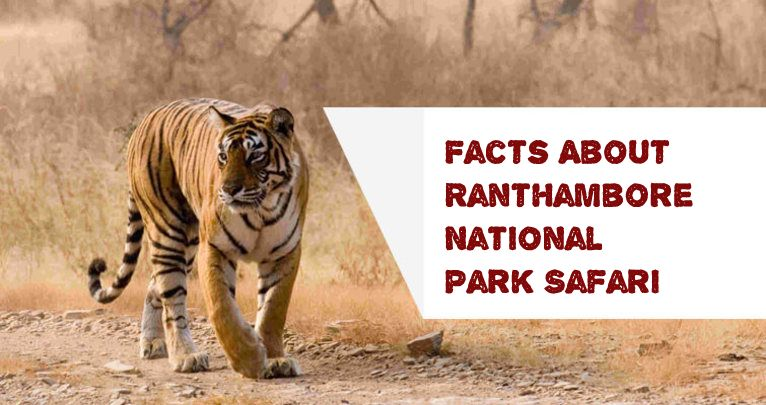 facts-about-ranthambore-national-park-safari